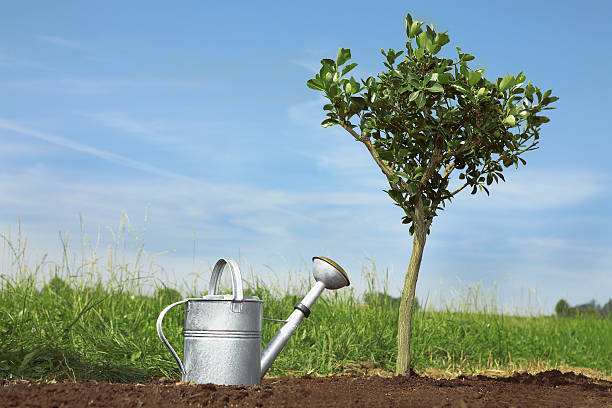 Germany, Bavaria, Planting tree on field, brass watering can:スマホ壁紙(壁紙.com)