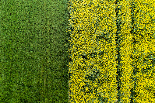 Crop - Plant「Germany, Bavaria, Aerial view of rape fields」:スマホ壁紙(11)