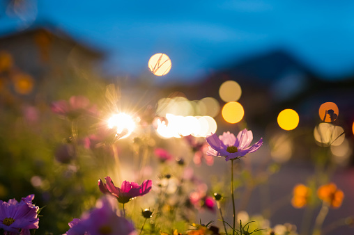 月「Germany, Bavaria, Roadside flower bed backlit by car headlight」:スマホ壁紙(16)