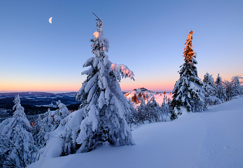 Bavarian Forest「Germany, Bavaria, Bavarian Forest in winter, Great Arber, snow-capped spruces in the morning」:スマホ壁紙(3)