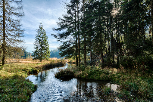 Bayerischer Wald National Park「Germany, Bavaria, Bavarian Forest National Park, Lake Grosser Abersee in autumn」:スマホ壁紙(1)