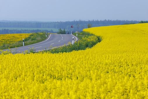 アブラナ「Germany, Bavaria, View of rural road with yellow flowering rapeseed field」:スマホ壁紙(1)