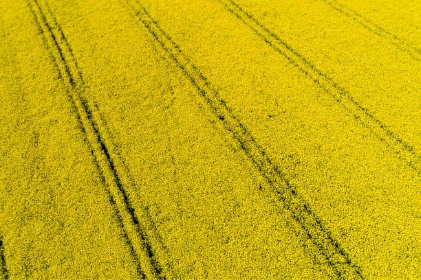 Germany, Bavaria, Tire tracks in a rape field:スマホ壁紙(壁紙.com)