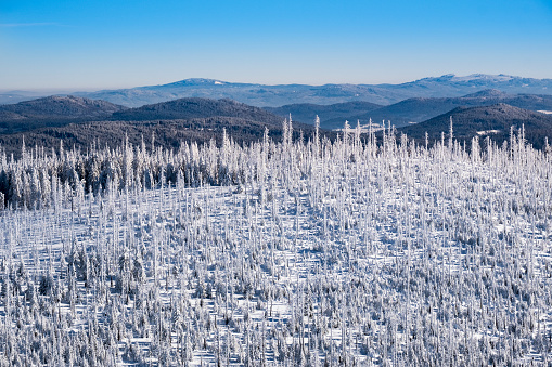Bayerischer Wald National Park「Germany, Bavaria, view from Lusen at snow-covered Bavarian Forest with natural regeneration」:スマホ壁紙(9)