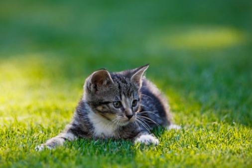 Kitten「Germany, Bavaria, Kitten lying in grass, portrait」:スマホ壁紙(17)