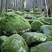バイエルンの森壁紙の画像(壁紙.com)