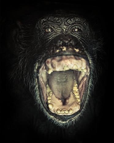 Furious「chimpanzee screaming」:スマホ壁紙(16)