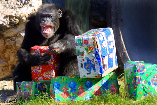 プレゼント「Christmas with the Chimps in West Palm Beach」:写真・画像(2)[壁紙.com]