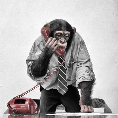 Nerd「Chimpanzee on the phone」:スマホ壁紙(13)