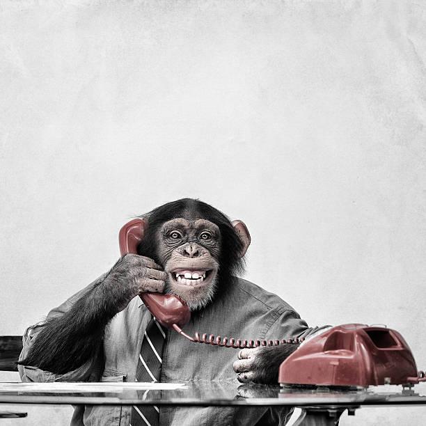 Chimpanzee on the phone:スマホ壁紙(壁紙.com)