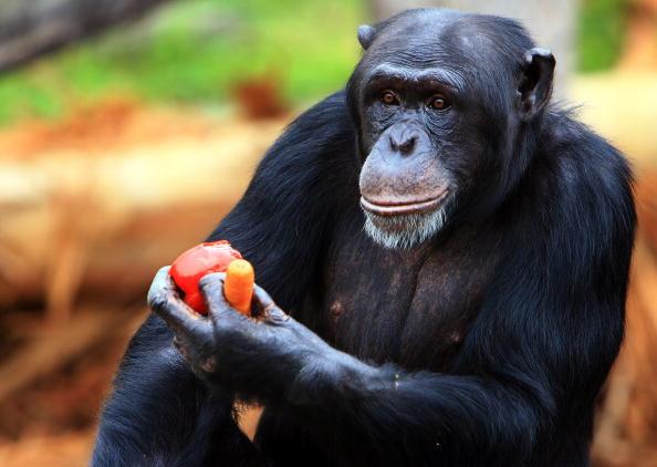 Brown Bear「Tarongas Animals Receive Christmas Treats」:写真・画像(12)[壁紙.com]