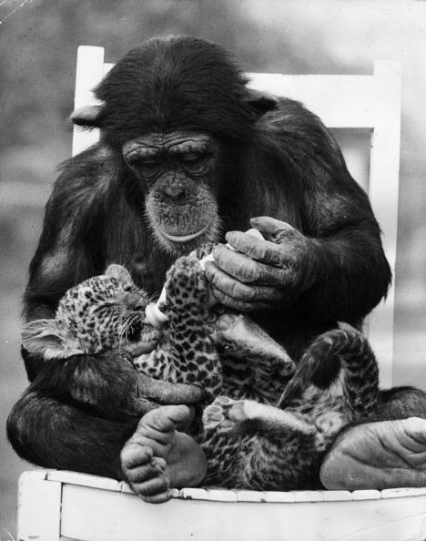 Animal「Feeding Cub」:写真・画像(18)[壁紙.com]