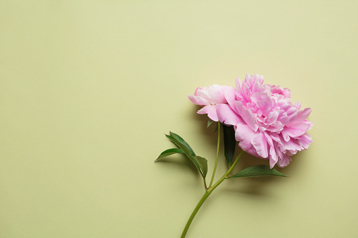 Pastel「Blooming flower in pastel background」:スマホ壁紙(18)
