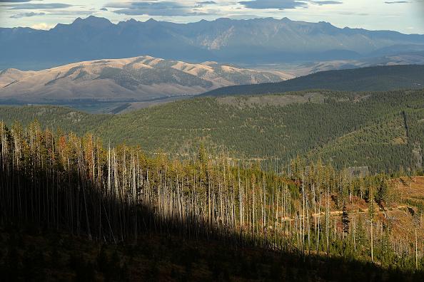 Horizontal「Montana Forests Struggle With Climate Change」:写真・画像(14)[壁紙.com]