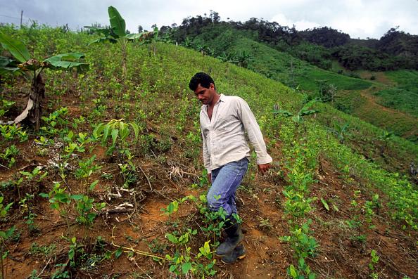 葉・植物「Inside FARC Country In Colombia」:写真・画像(7)[壁紙.com]
