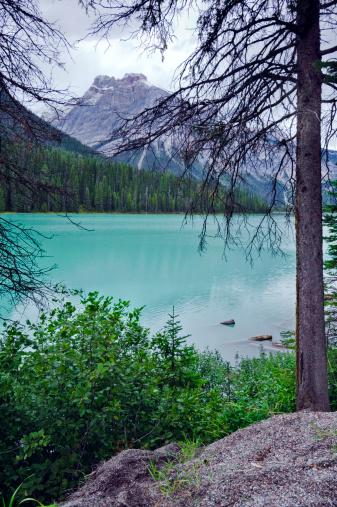 Yoho National Park「Emerald Lake Scenic」:スマホ壁紙(11)