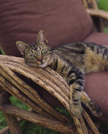 Three Quarter Length「Tabby cat lying down on chair」:スマホ壁紙(8)