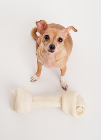Three Quarter Length「Small dog with big bone」:スマホ壁紙(19)