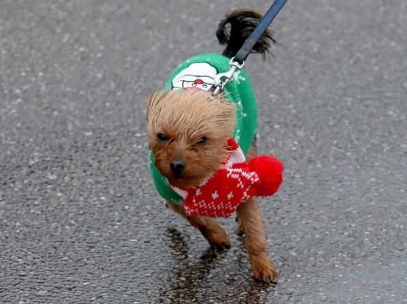 Offbeat「Gales and Heavy Rain Threaten Festive Getaway」:写真・画像(18)[壁紙.com]