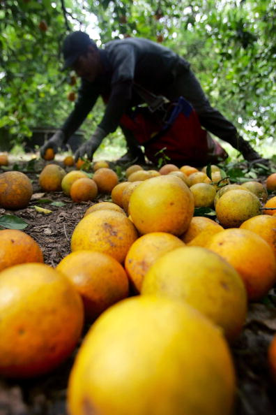 Juice - Drink「Florida Citrus Production To Be Among Worst In A Decade」:写真・画像(7)[壁紙.com]