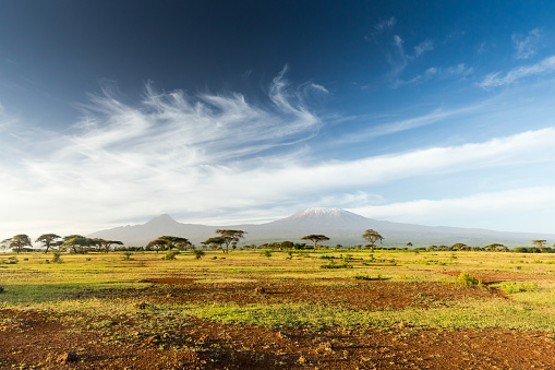 National Park「Mt Kilimanjaro & Mawenzi peak and Acacia - morning」:スマホ壁紙(12)