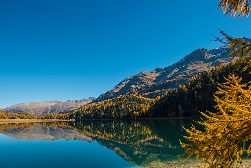 European Larch「Engadine lake and mountains 8 Switzerland」:スマホ壁紙(7)