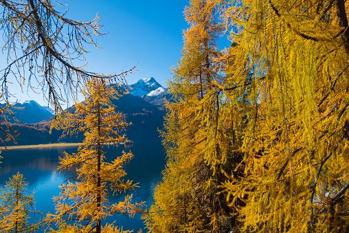European Larch「Engadine lake and mountains in Switzerland」:スマホ壁紙(3)