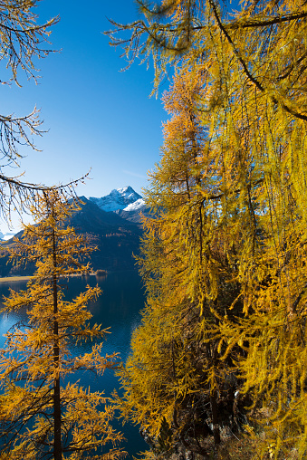 European Larch「Engadine lake and mountains 6 Switzerland」:スマホ壁紙(8)