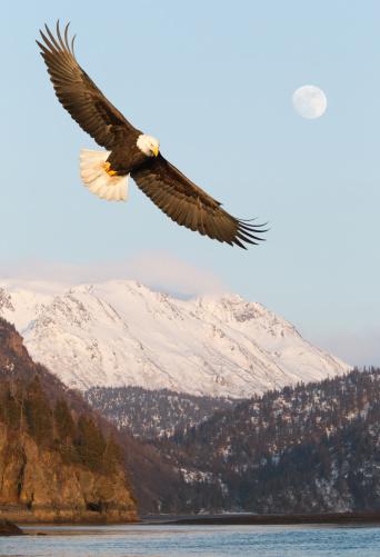 アラスカ「イーグル、雪に覆われた山々」:スマホ壁紙(11)