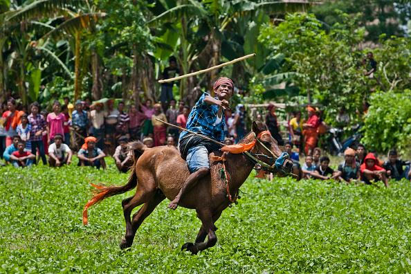 お祭り「The Pasola Jousting Festival」:写真・画像(5)[壁紙.com]