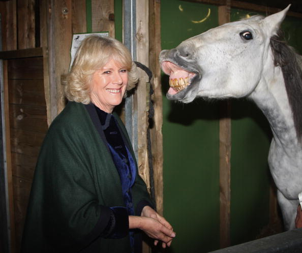 Bestof「The Duchess of Cornwall Attends The Olympia Horse Show」:写真・画像(3)[壁紙.com]