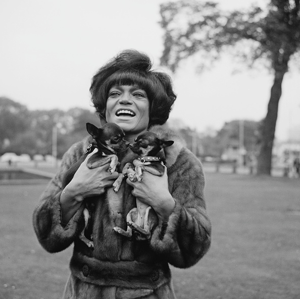Holding「Eartha Kitt」:写真・画像(11)[壁紙.com]