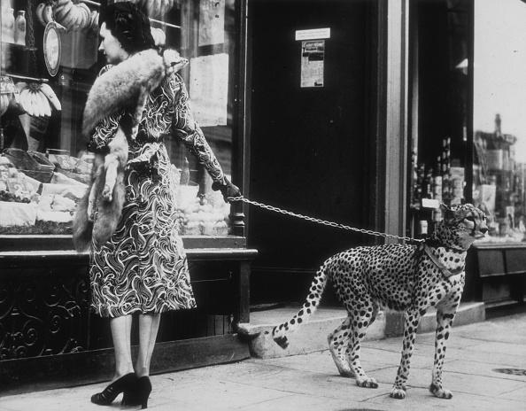 One Woman Only「Cheetah Who Shops」:写真・画像(16)[壁紙.com]