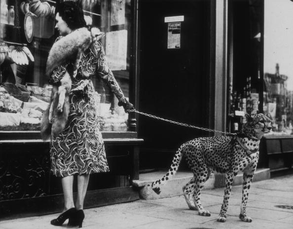 Shopping「Cheetah Who Shops」:写真・画像(11)[壁紙.com]