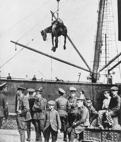 動物「War Horse Arrives In France」:写真・画像(12)[壁紙.com]