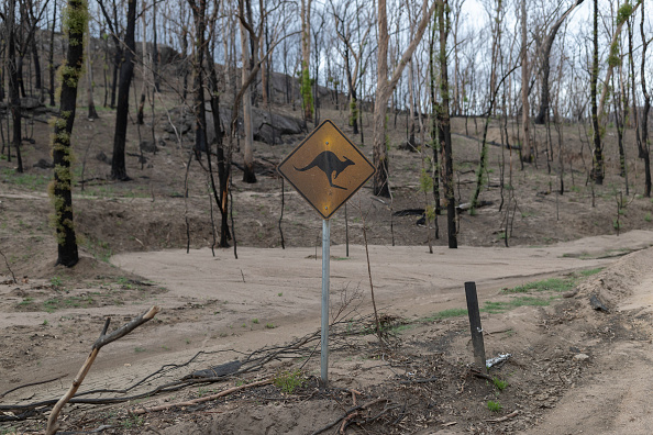 animal「Wytaliba and Torrington Communities Start To Rebuild Following Devastating Bushfires」:写真・画像(6)[壁紙.com]