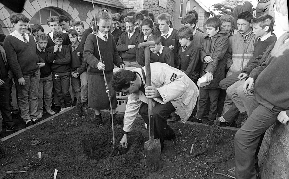 Planting「Stephen Roche at Dundrum College」:写真・画像(12)[壁紙.com]