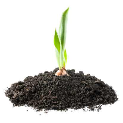 Plant Bulb「Growing Tulip」:スマホ壁紙(4)
