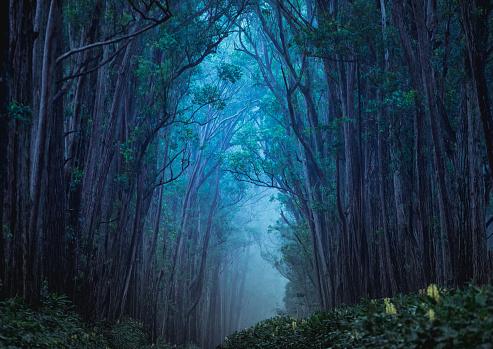 Treelined「Enchanted Forest」:スマホ壁紙(14)