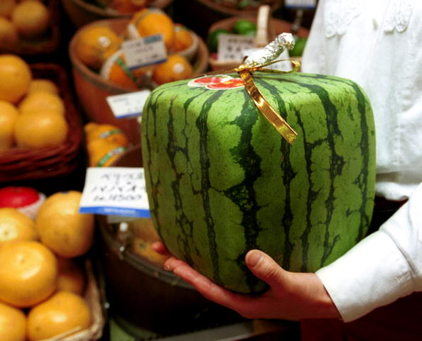 メロン「Japan''s Square Watermelons」:写真・画像(12)[壁紙.com]