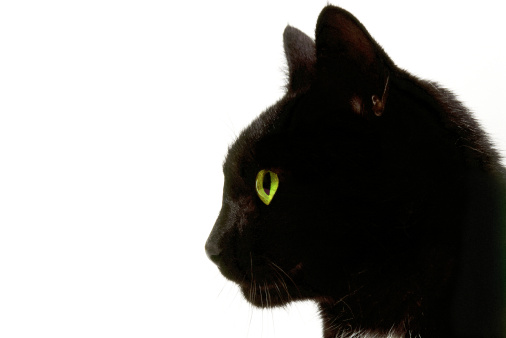 子猫「side profile of a black cat」:スマホ壁紙(4)