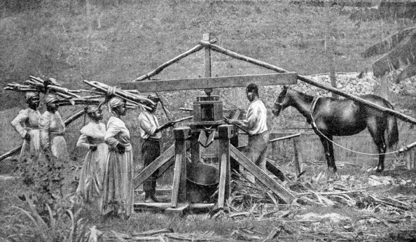 Sugar Cane「A wooden, horse-powered suger cane crushing mill, West Indies, 1922.」:写真・画像(16)[壁紙.com]