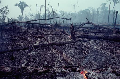 Deforestation「Logging Slash Burned」:スマホ壁紙(17)