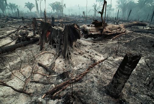 Amazon Rainforest「Logging Slash Burned」:スマホ壁紙(3)