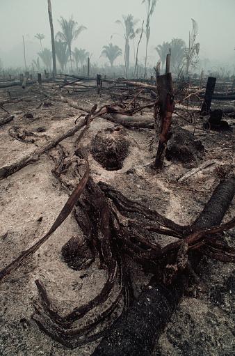 Amazon Rainforest「Logging Slash Burned」:スマホ壁紙(13)