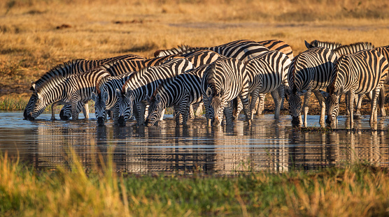 Eco Tourism「Zebras In The Wild」:スマホ壁紙(12)