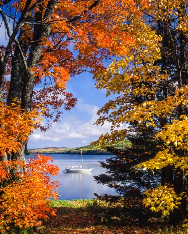 Mode of Transport「sailboat on lake framed by vibrant autumn foliage」:スマホ壁紙(12)