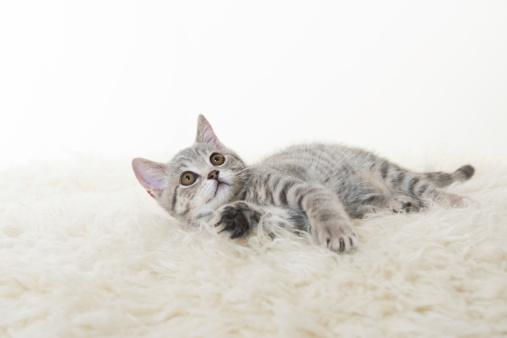 子猫「グレイの猫」:スマホ壁紙(10)