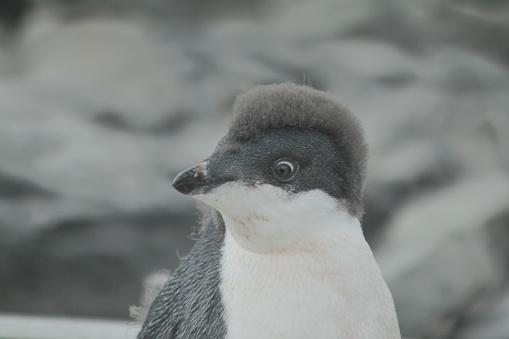 Teenager「Baby punk penguin」:スマホ壁紙(17)