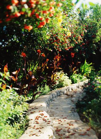 Flowering Maple「Walkway through garden with cannas and abutilon」:スマホ壁紙(10)